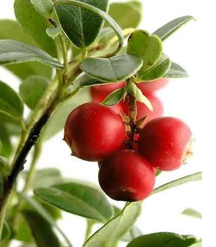 Camu-Camu-Fruit