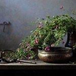 Новинки и новости здоровой красоты: IX-2015