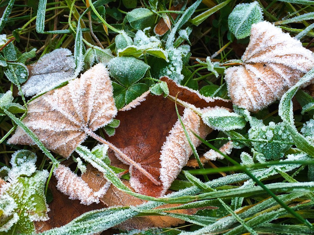 late-autumn-leaves
