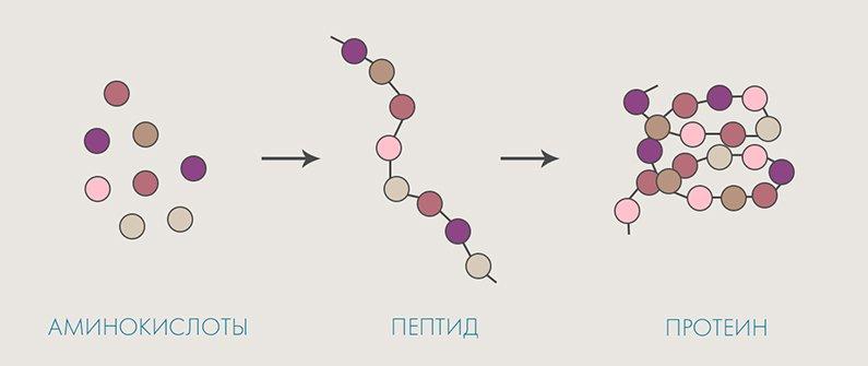 amino acids peptide protein